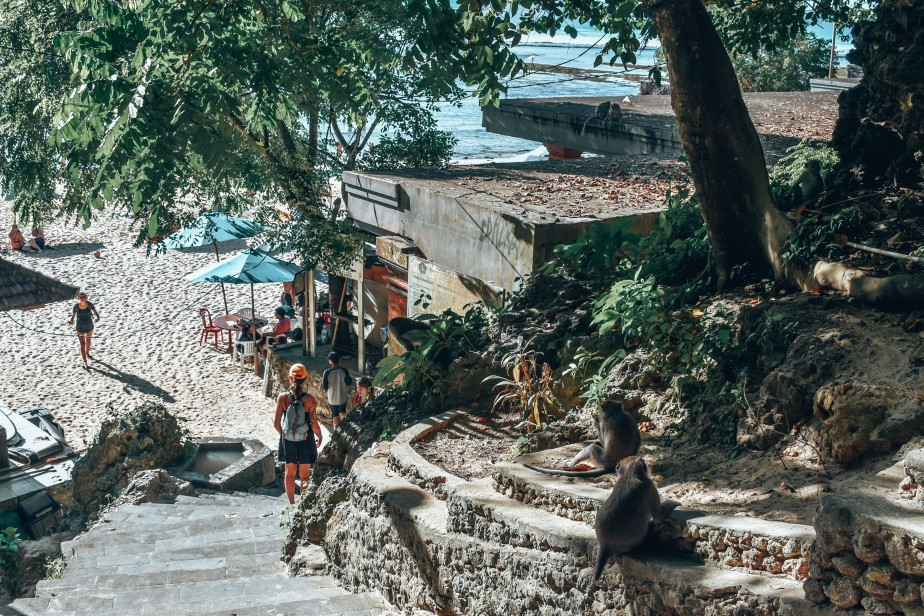 Małpy w Padang Padang Beach